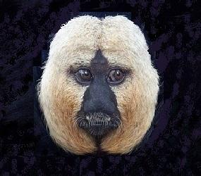 noticias-destacadas/monos-americanos-en-el-museo-de-ciencias-naturales