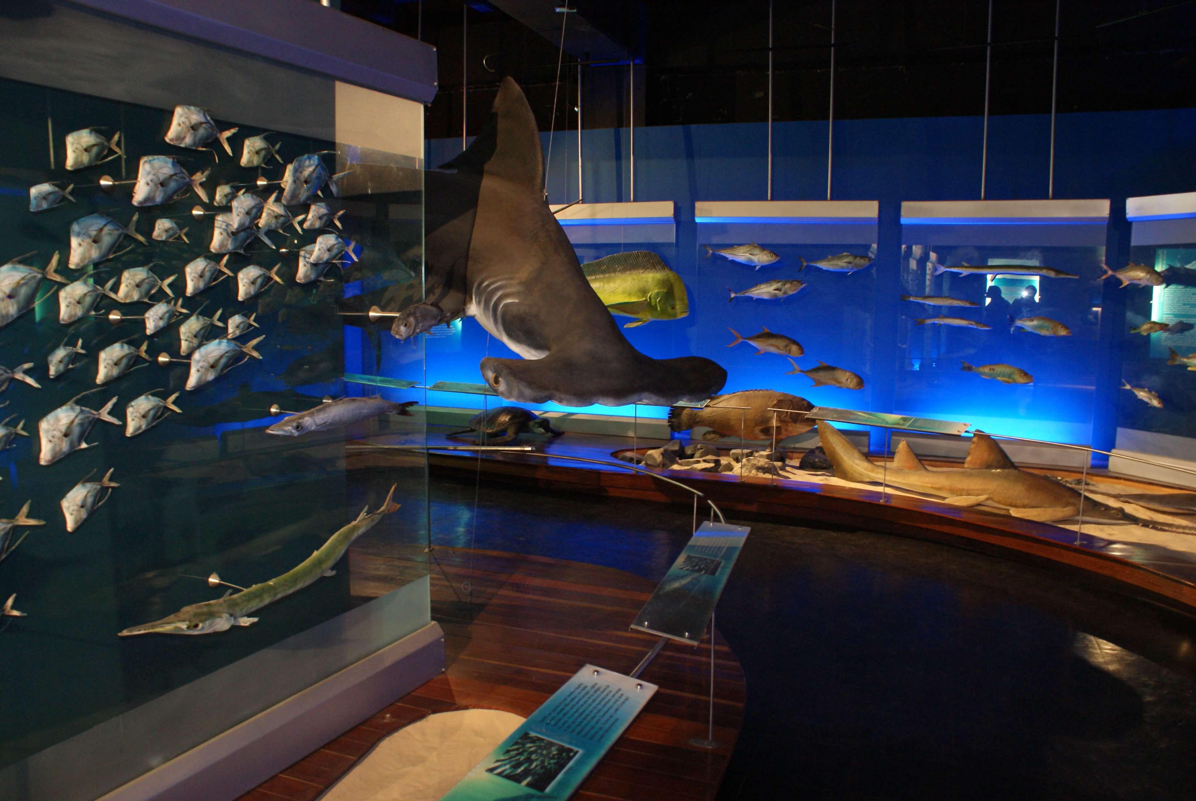 patrimonio-turistico/museo-departamental-de-ciencias-naturales--federico-carlos-lehmann
