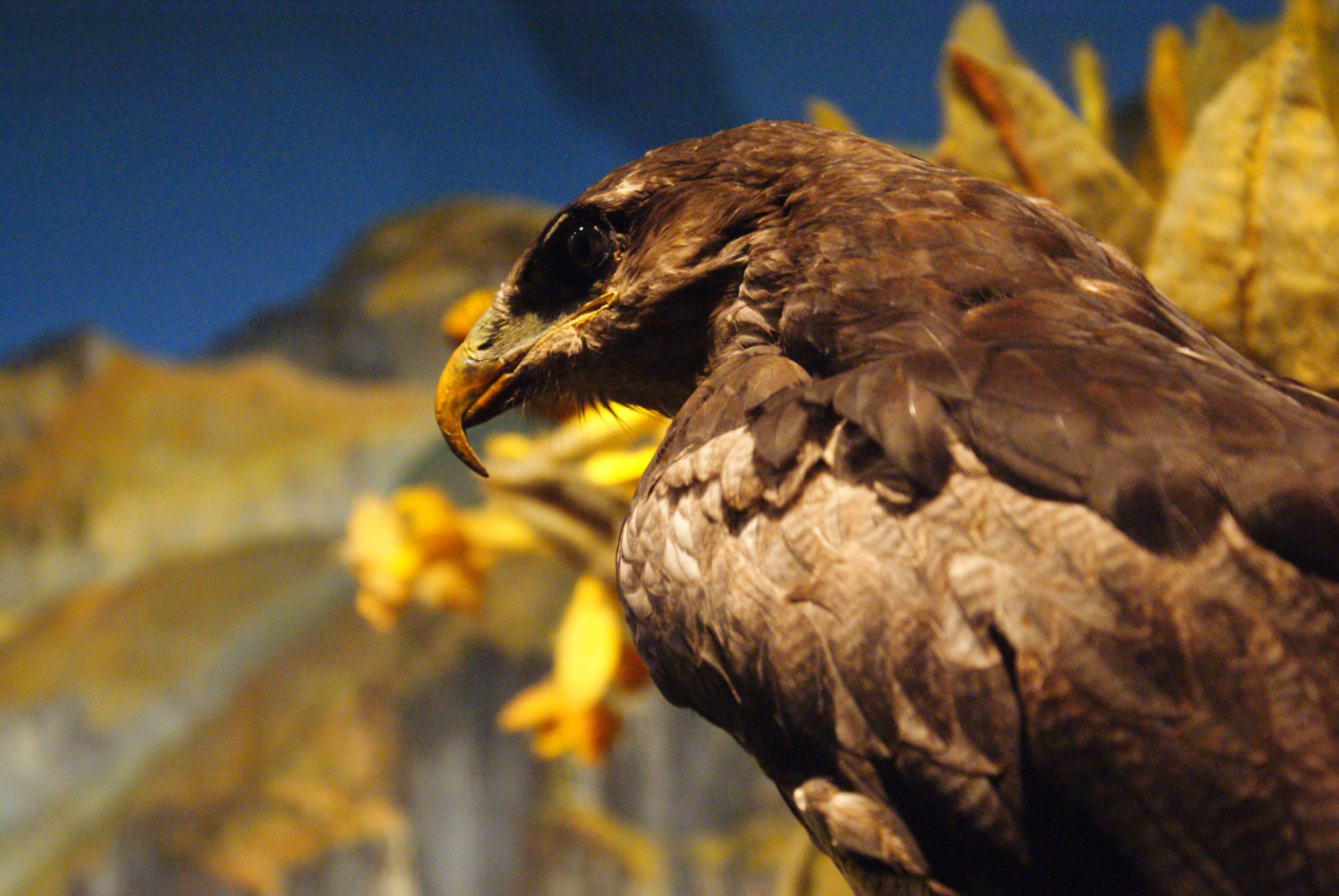 galeria-multimedia/museo-de-ciencias-naturales-inciva