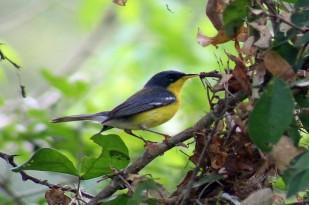 noticias-destacadas/resultado-de-el-gran-dia-mundial-de-las-aves-en-el-parque-natural-regional-el-vinculo